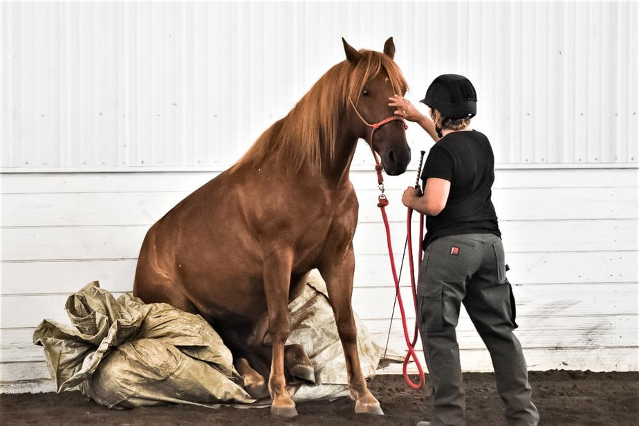 A student of Operation Wild Horse rubbing the face of a mustang sitting on a tarp.