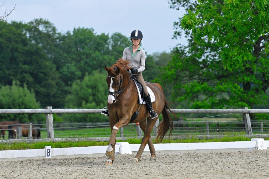 During every one of the horse's movements, the rider has the opportunity to influence the horse through half-halt. Photo credit: Horst Streitferdt