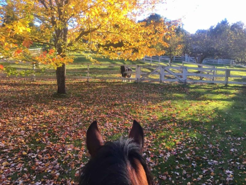 Photo of Life Between the Ears owner and her horse in fall.