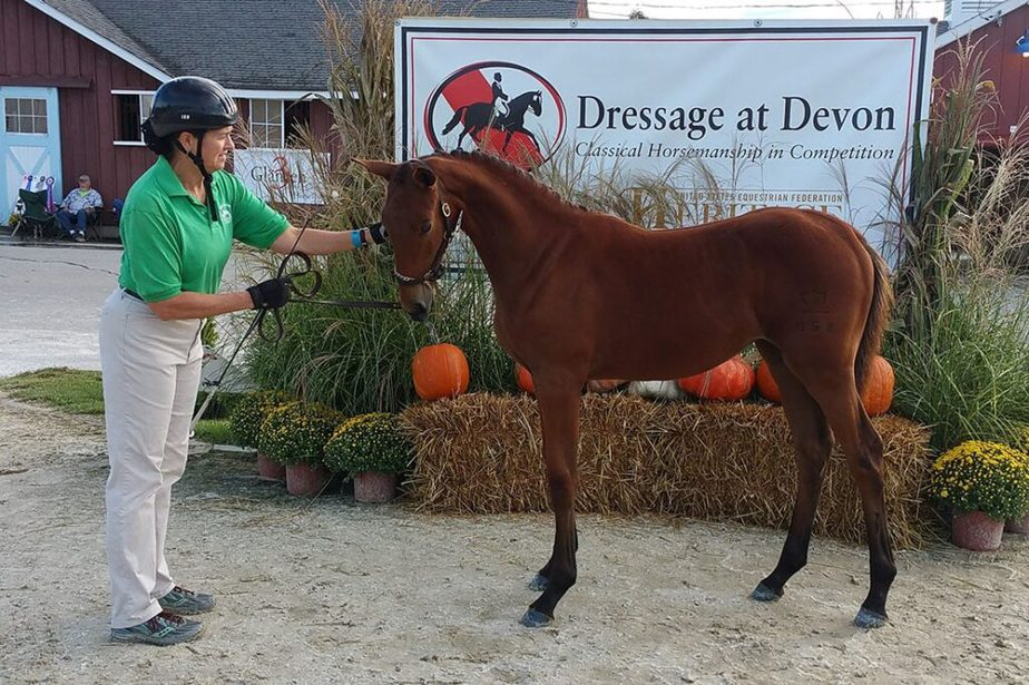 Christine Smith with her foal at Dressage at Devon.