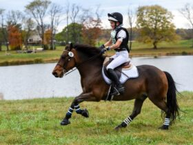 Interscholastic Eventing League competitor galloping on cross-country.